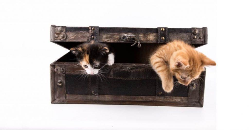 vous d m nagez quelles pr cautions prendre avec votre chat comportementalistes pour. Black Bedroom Furniture Sets. Home Design Ideas